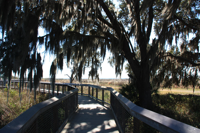Spanish moss overhanging boardwalk at La Chua Trail