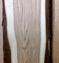 Wood slice with heartwood and sapwood