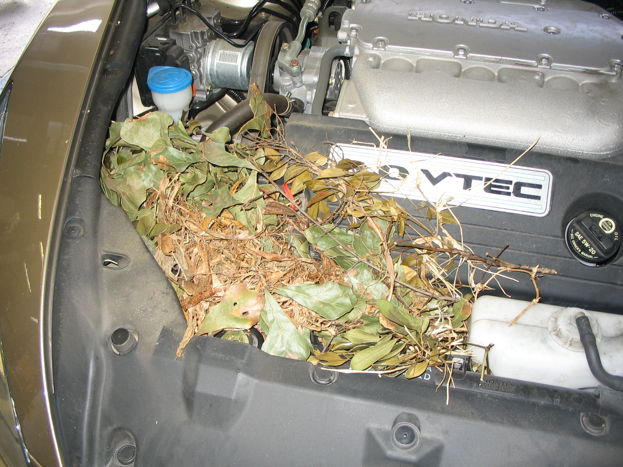 squirrel nest in engine
