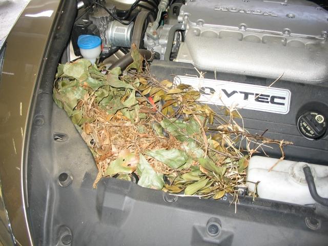 squirrel nest in engine