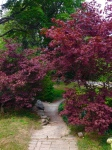 red maple lining pathway