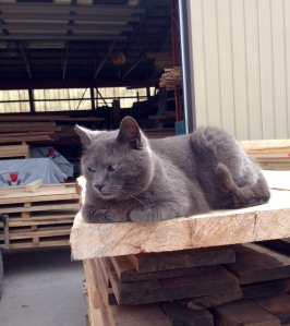 Smoky the cat at Phillmore's